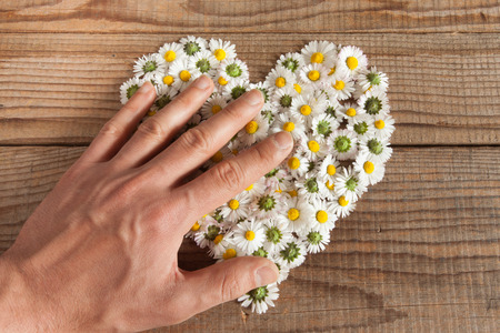 sweetness: Heart made of daisies flowers in wooden background, covered by an hand to represent personal feelings