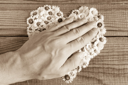 Heart made of daisies flowers in wooden background, covered by an hand to represent personal feelings