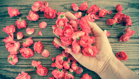 fondle: hand among red roses on a wooden table, vintage effect