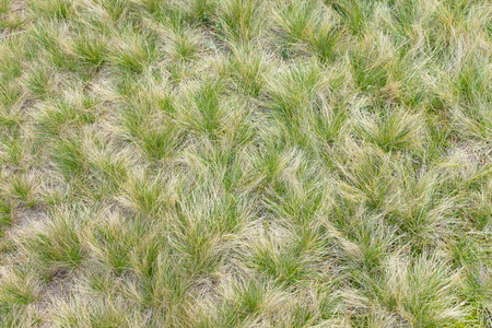 grass from a mountain meadow