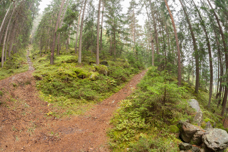 A single alpine path splits in two different directions. Its an autumnal cloudy day.