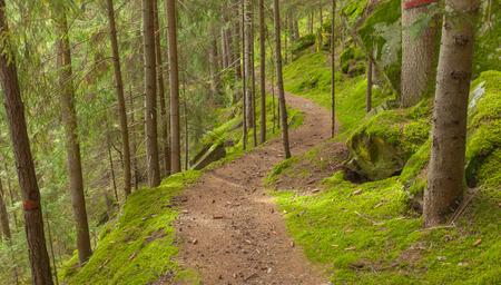 wandelen in het bos lang een pad in een bewolkte dag. Geen mensen in de buurt
