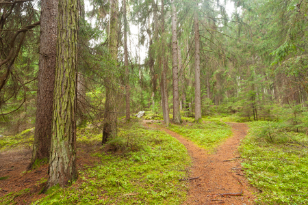 A single alpine path splits in two different directions. It's an autumnal cloudy day.