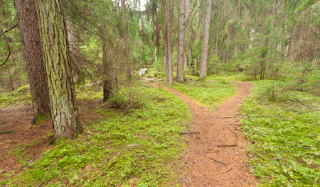 indecision: A single alpine path splits in two different directions. Its an autumnal cloudy day.