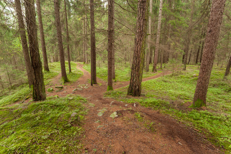Inside a typical forest of the Italian Alps