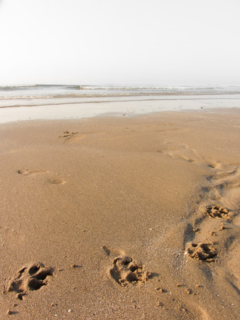 dog paws shapes long the beach next to the sea Imagens