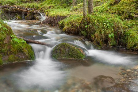 A stream flows inside the woods in Alto Adige