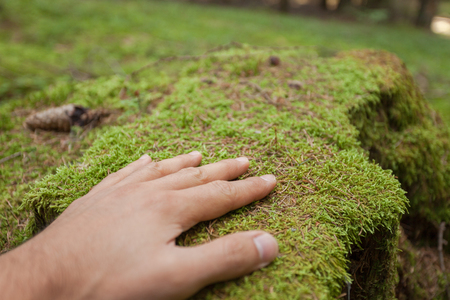 caressing a surface of green moss with an hand inside the forest