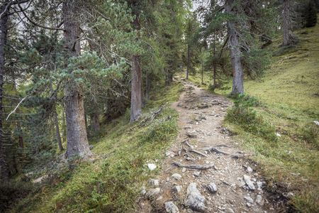 walking long a peaceful mountain path in Valle di Funes into the Italian Dolomites Imagens