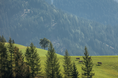 green pasture over the odle group in Dolomites