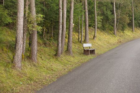 wooden bench inside a forest, no people around
