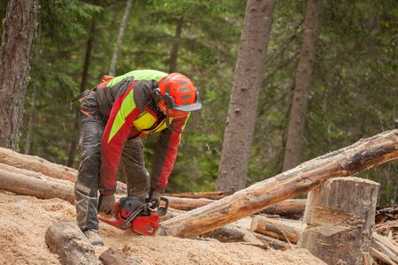 A lumberjack working safely with chainsaw and protection equipment inside an Italian forest Standard-Bild