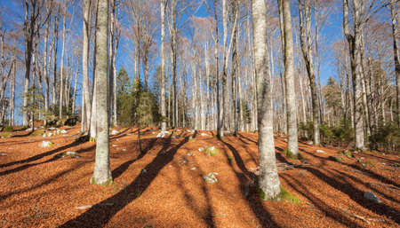 foliage inside an Italian forest at fall Standard-Bild