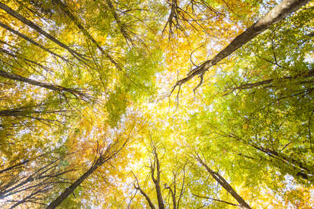 foliage inside an Italian forest at fall Banco de Imagens