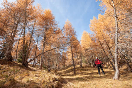 A trekker walking solo among the forest in a sunny atumnal day Banco de Imagens