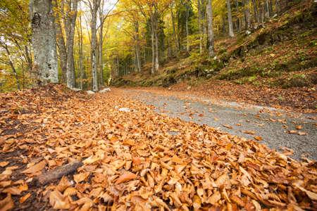 foliage inside an Italian forest at fall long a secondary street Banco de Imagens