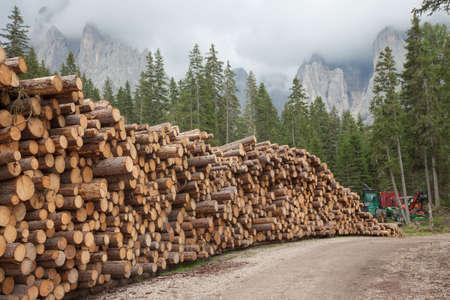 cut pine tree inside an Italian forest