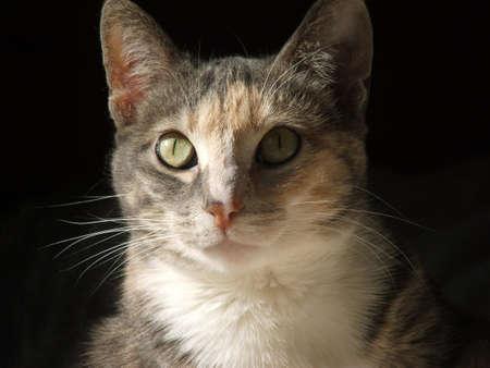 calico: A closeup of a calico cat in the sun.