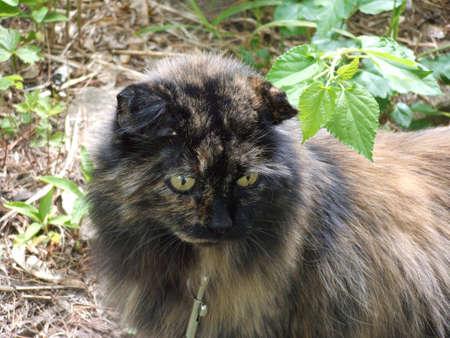 calico cat: Calico cat outdoors