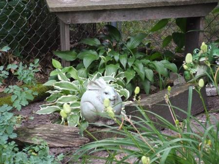 hostas: Statue of rabbit among Hostas and old bench  Stock Photo