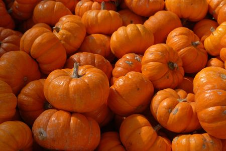 Mini Halloween pumpkins piled up waiting to be used for decorations photo