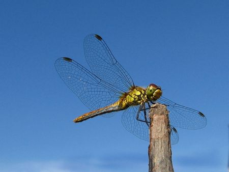 dragonfly, outdoors, wing, insect, tranquil photo