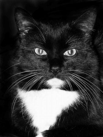 Black cat, cats, eyes, pets