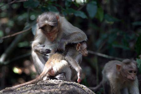ugliness: monkey