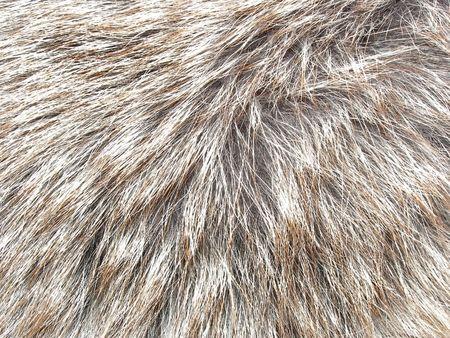 estructuras de la piel Foto de archivo - 2112341