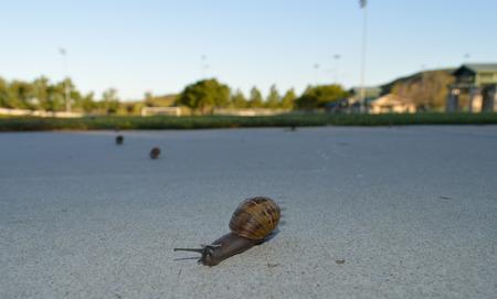 Snail Crossing Reklamní fotografie
