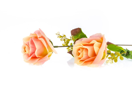 spurious: roses on a white background