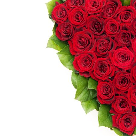 bouquet of roses, red roses photo
