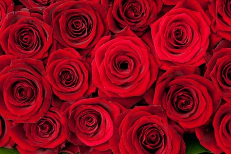beautiful red roses, background texture Stock Photo - 6714610
