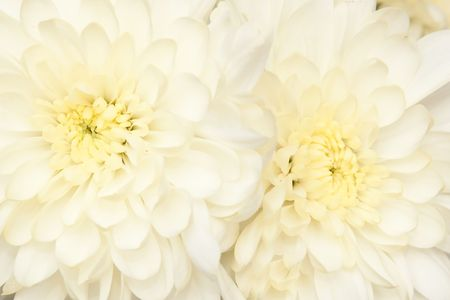 pestil: beautiful bouquet with  chrysanthemum, background Stock Photo