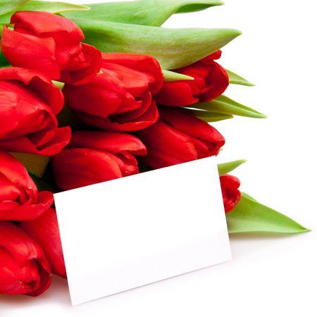 beautiful red tulips on white photo