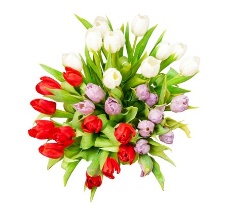 bouquet of beautiful tulips on white Stock Photo - 6718838