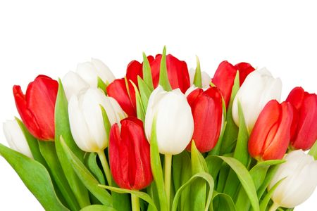 beautiful bouquet of  tulips on white Stock Photo - 6718808