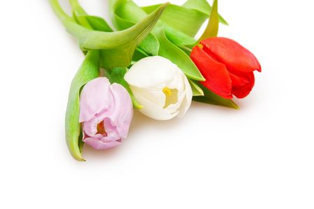 three beautiful  tulips on white Stock Photo - 6759274