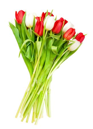 beautiful bouquet of  tulips on white Stock Photo - 6809974