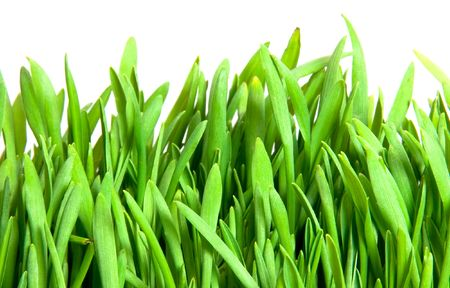 green grass isolated on white Stock Photo - 6810251