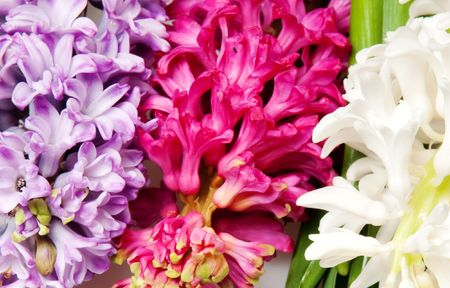 beautiful hyacinth, background texture, flowers Stock Photo - 6809667