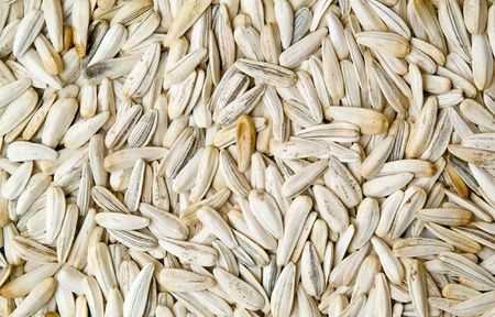 white sunflower  seed, background textured Stock Photo - 6810872