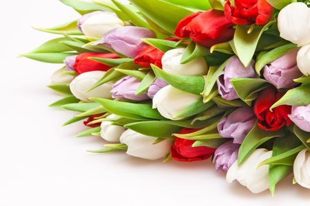 beautiful bouquet of tulips isolated on white Stock Photo - 6812405