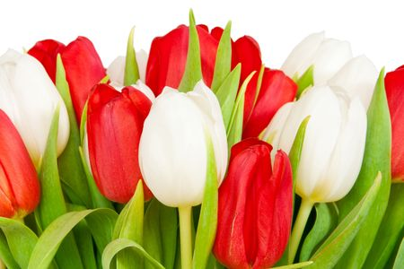 beautiful bouquet of  tulips on white Stock Photo - 6812459