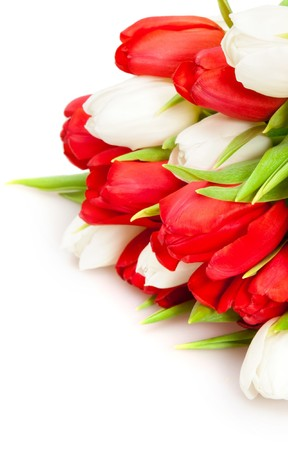 beautiful bouquet of  tulips on white Stock Photo - 6933235