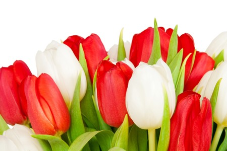 beautiful bouquet of  tulips on white Stock Photo - 7017940