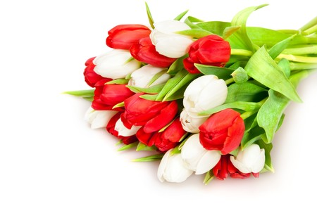 beautiful bouquet of  tulips on white Stock Photo - 7018192