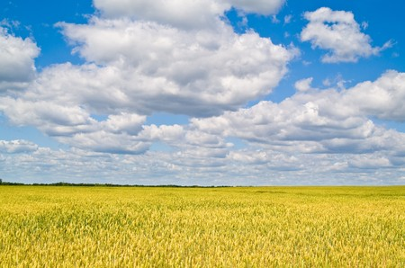 beautiful landscape with blue sky and white clouds Stock Photo - 7018207