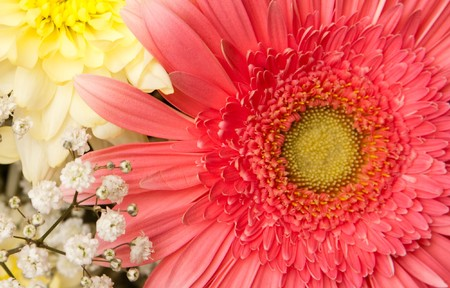 beautiful bouquet with daisy and chrysanthemum photo