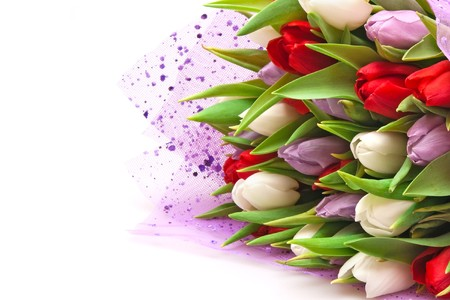 beautiful bouquet of tulips isolated on white Stock Photo - 7018463